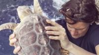 portici-il-piu-grande-centro-ricerche-sulle-tartarughe-marine