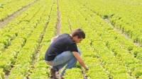 molti-piu-giovani-nell-agricoltura-del-mezzogiorno