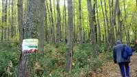 alla-scoperta-della-foresta-demaniale-di-roccarainola