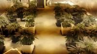 video-ecco-come-ti-coltivo-una-serra-di-marijuana-in-casa