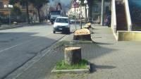 volturara-sindaco-tagli-inevitabili-pianteremo-nuovi-alberi