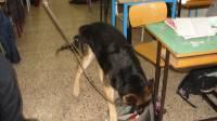 droga-nelle-scuole-la-trova-il-cane-attila