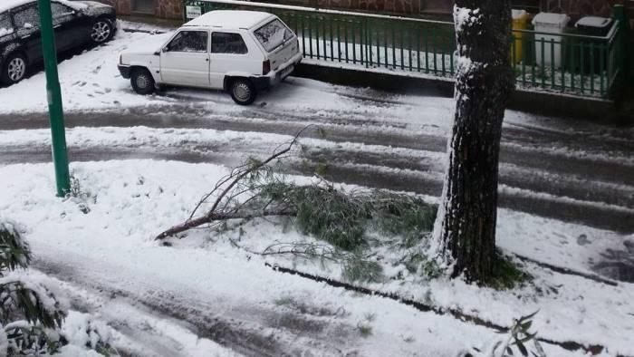Maltempo, forte vento abbatte albero a Roma: donna in ospedale
