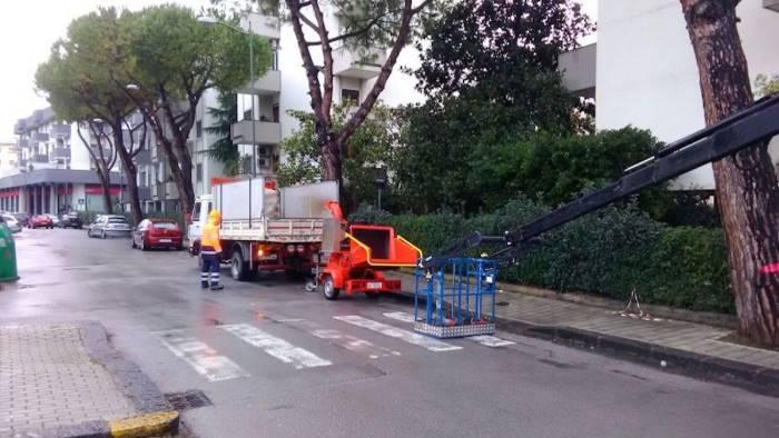 video abbattuti alberi pericolosi messa in sicurezza la zona