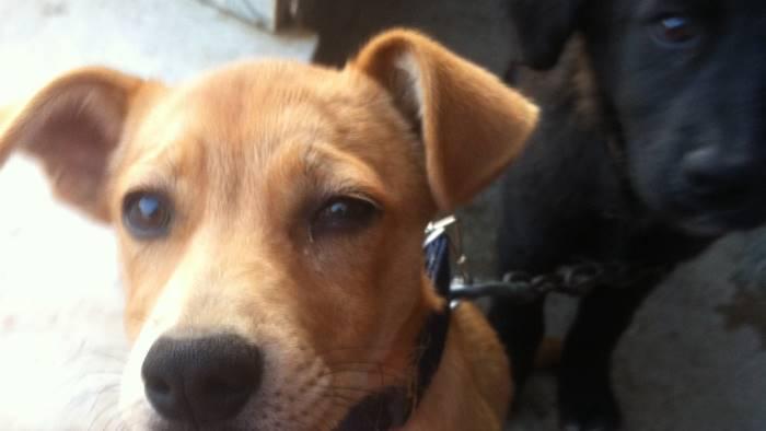 aiutatemi a ritrovare i miei cani offro una ricompensa