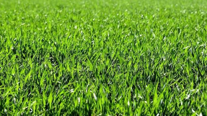 pellezzano diventa green con l aiuto dei suoi cittadini