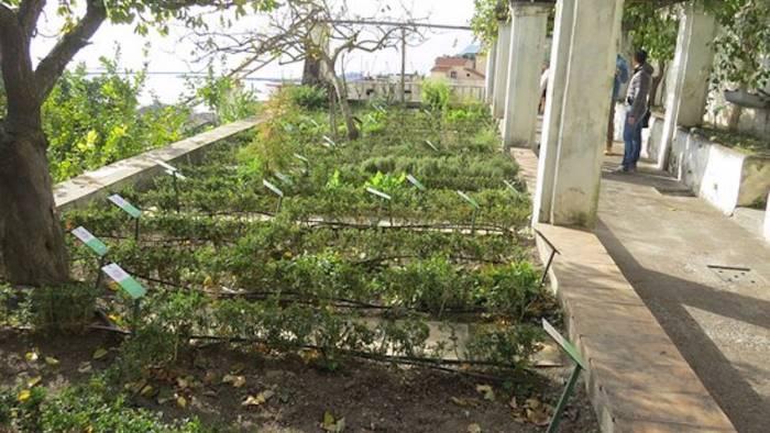 progetto sugli orti botanici terapeutici salerno capofila
