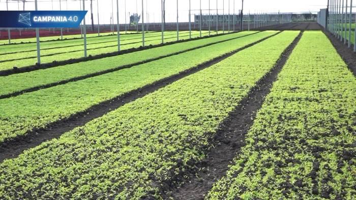 dal drone alla stazione meteorologica ecco l agricoltura 4 0