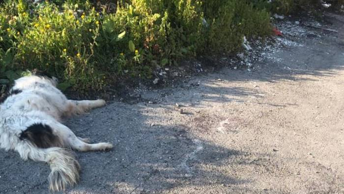eboli cane impiccato e lasciato senza vita in strada