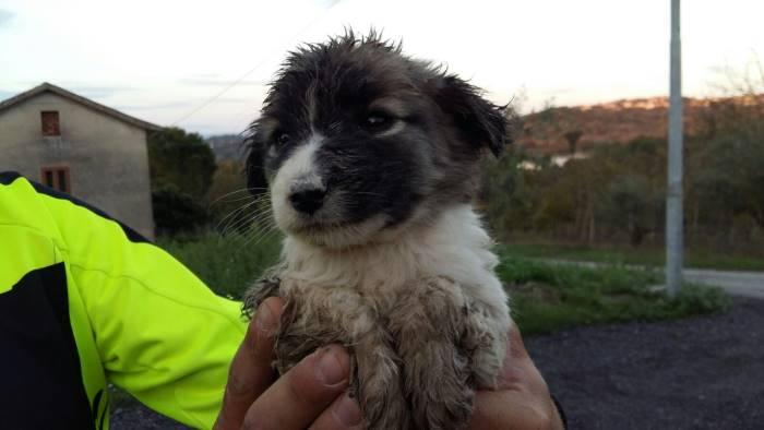 cucciolo di cane finisce in un pozzo le foto del salvataggio