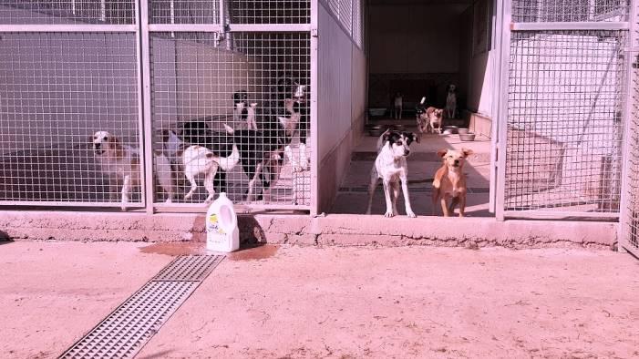 uno spiraglio di luce per 700 cani senza cibo