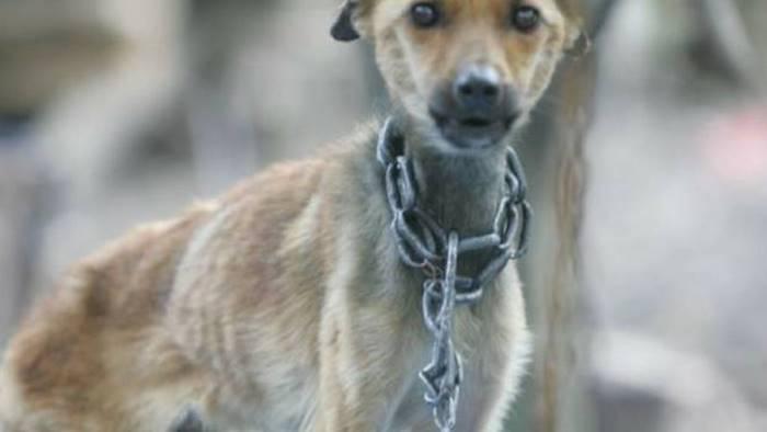 cane strozzato dal collare in ferro 60enne denunciato