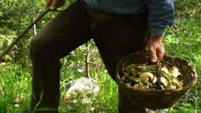 anziani vanno a cercar funghi e scompaiono ritrovati