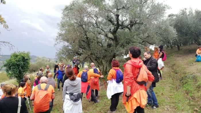 camminata tra gli olivi nelle terre di campania