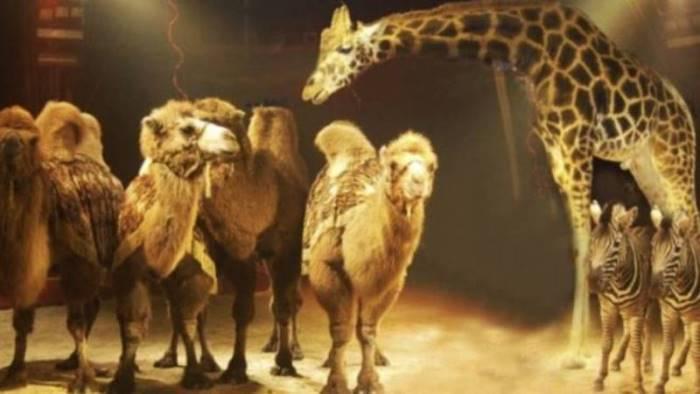 circo senza animali approvata mozione borrelli