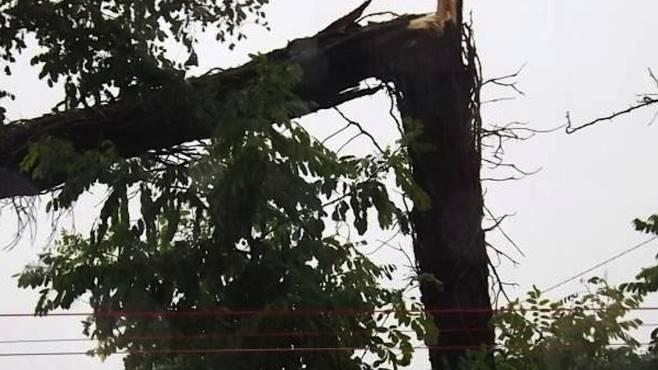 Dopo alberi sradicati, il vento provoca black out ...