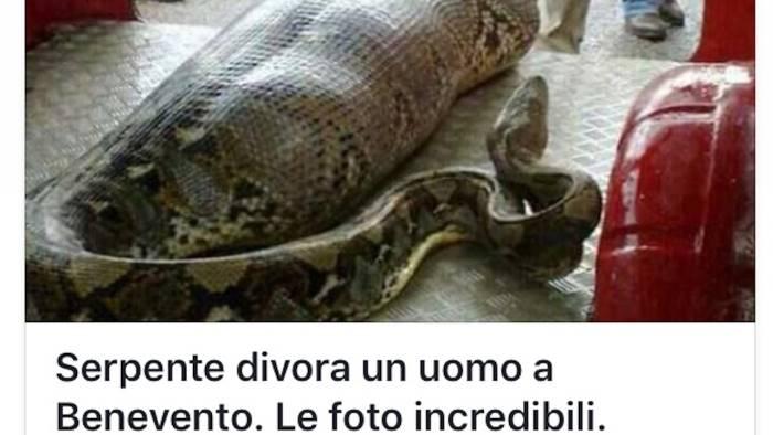 Serpente Divora Un Uomo A Benevento Bufala Sul Web Ottopagine It Benevento