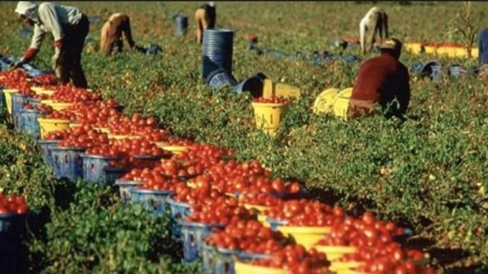nuova agricoltura e sostenibilita per l agro nocerino sarnese