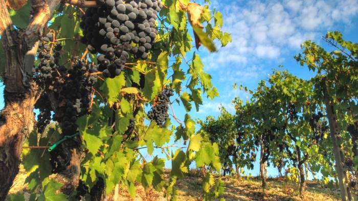Il testo unico del vino è legge, organizzazioni della filiera soddisfatte