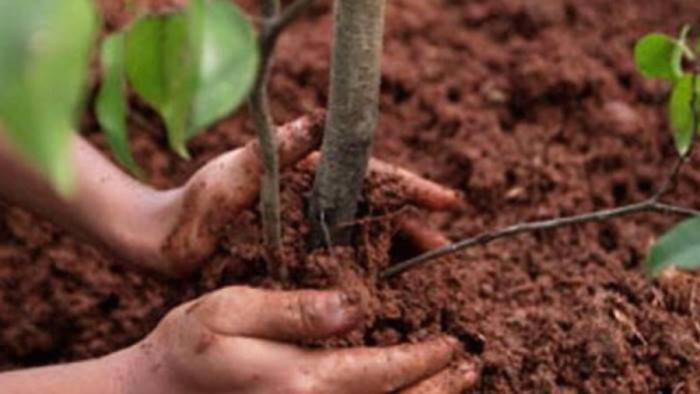 torna a giffoni la quinta edizione di alberi per il futuro