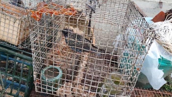 catturano specie protette denunciati i responsabili