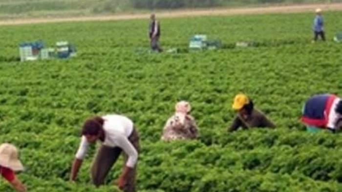 lavoratori agricoli esposti a gravi patologie