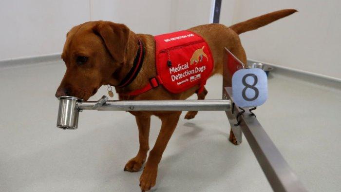 covid 19 i cani possono fiutare il virus