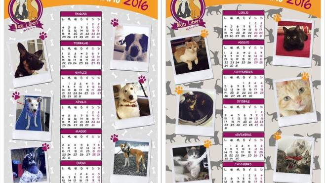 Juvecaserta Calendario.Nati Liberi Un Calendario Per Aiutare Il Canile