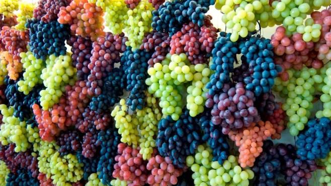 Risultati immagini per vino taurasi