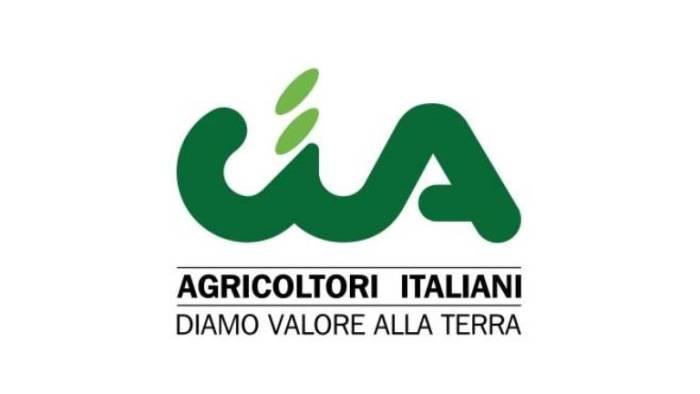 i rischi nella coltivazione e produzione delle olive