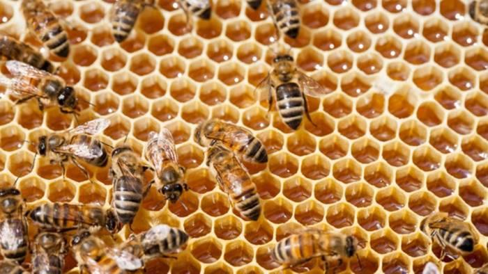 caiazzo corso di apicoltura domani la presentazione