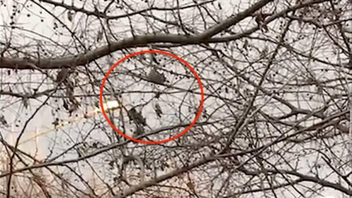 topi su alberi del terminal riunione operativa al comune