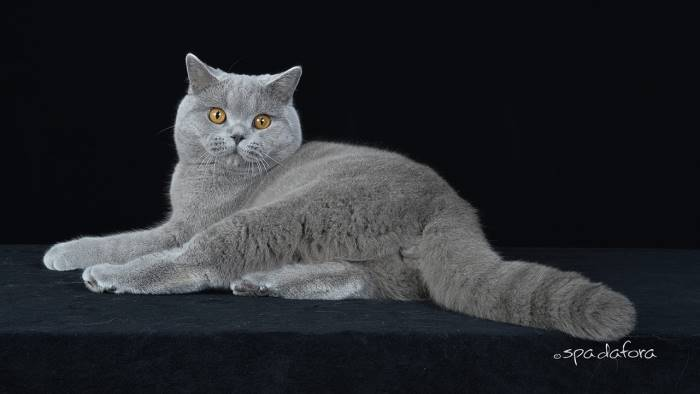 felina oltre 200 esemplari tra i piu belli al mondo a caserta