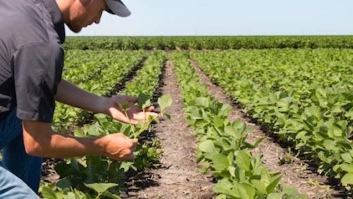 m5s agricoltura migliaia di giovani imprese verso fallimento