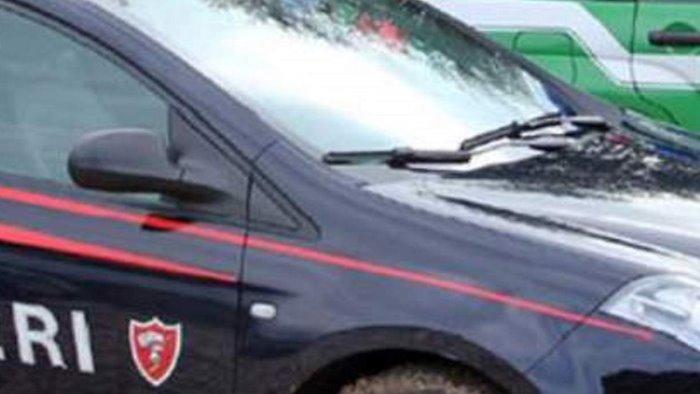 alleva cinghiali in cattivita blitz dei carabinieri forestali