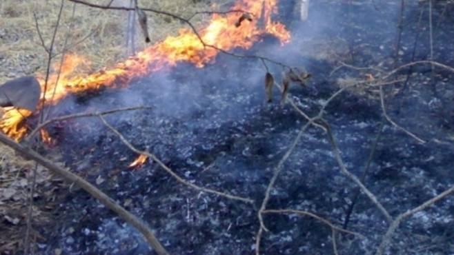 pineta in fiamme a greci vicino al lago