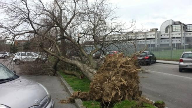Maltempo a caserta ad aversa alberi sradicati e crolli for Centro convenienza arredi marcianise marcianise ce