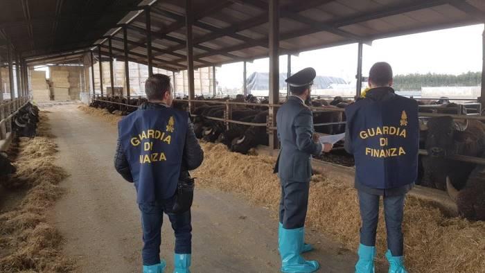 Scandalo mozzarelle di bufala: aziende sequestrate a Caserta