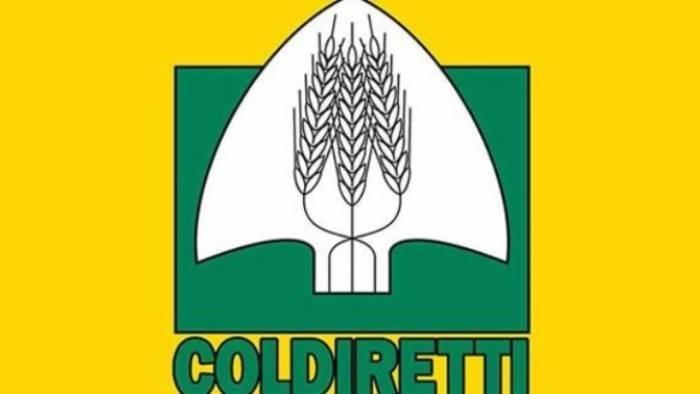 made in italy coldiretti 1 4 spesa alimentare resta anonima