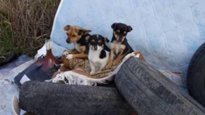 stop al commercio illegale di cani e gatti
