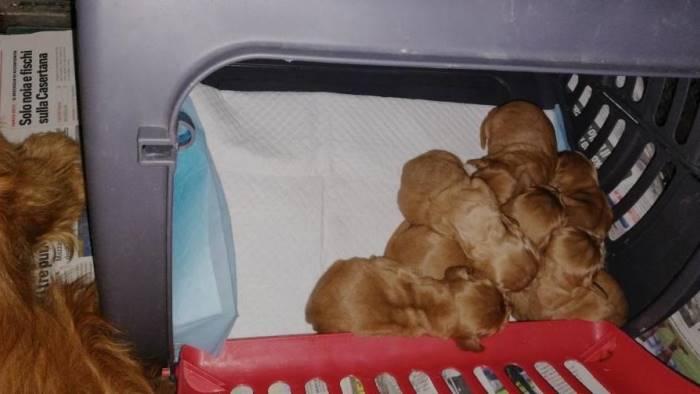 cani in stato di abbandono tra i rifiuti scatta la denuncia