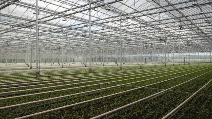 rifiuti tossici coldiretti non si penalizzi agricoltura
