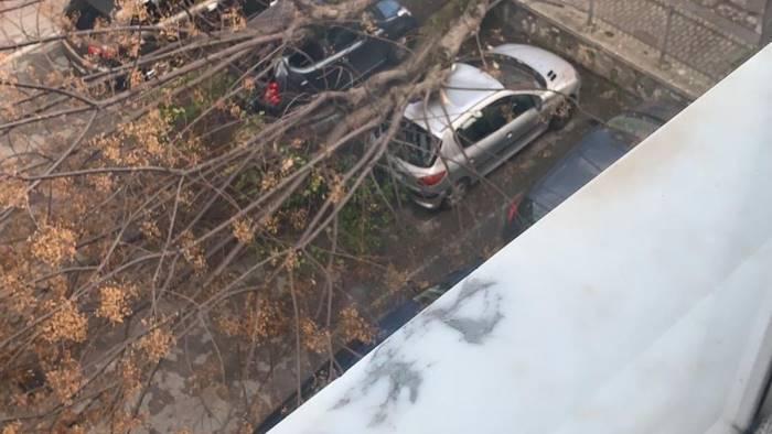 caduta alberi cammarota irresponsabilita gravissima