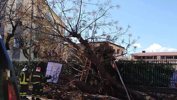 foto alberi abbattuti dal vento vicino all asilo vergogna