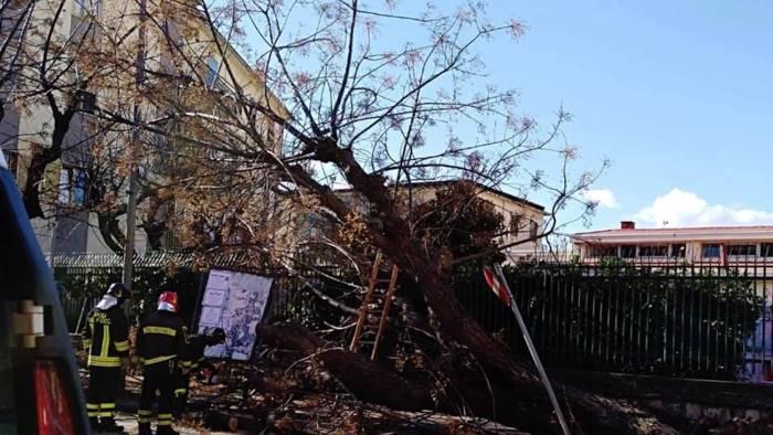 alberi abbattuti il caso finisce in procura gravi omissioni