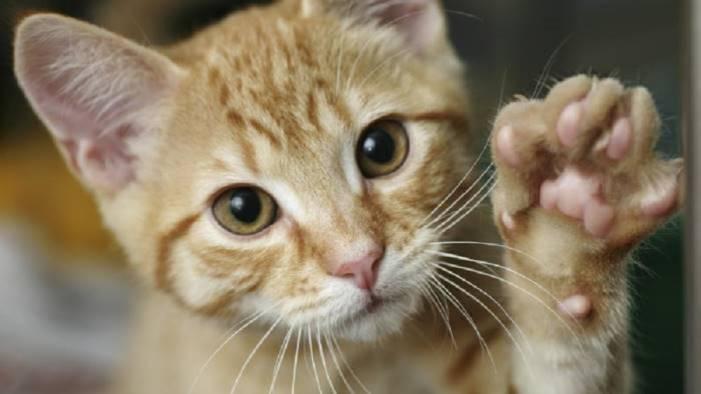 un gatto ferito a pacevecchia e l indagine su una vigilessa