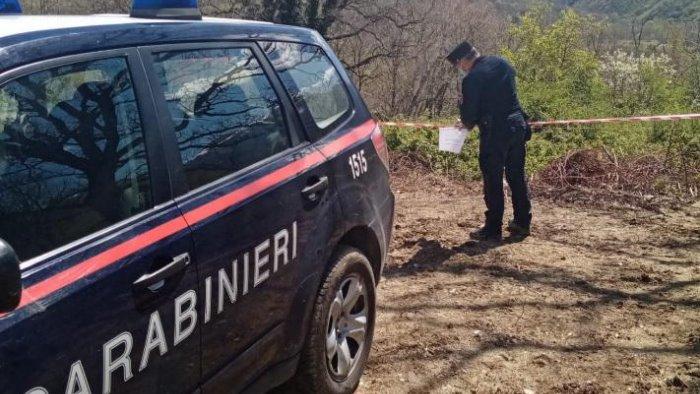 taglio boschivo privo di autorizzazioni blitz dei carabinieri