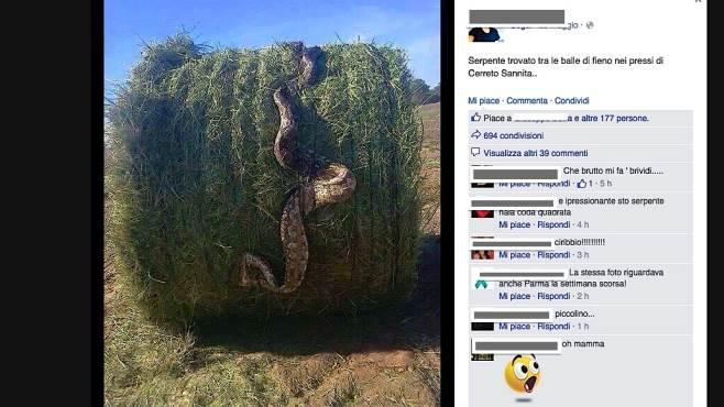 un anaconda uccisa nel fieno la bufala corre sul web