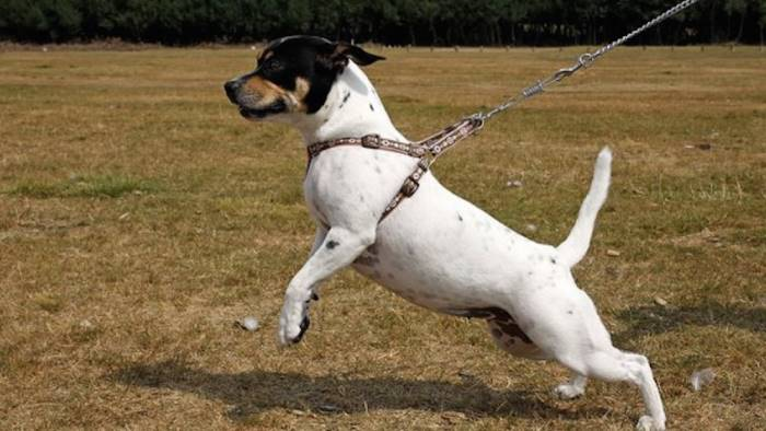 cani senza guinzagli e microchip al parco scattano le multe