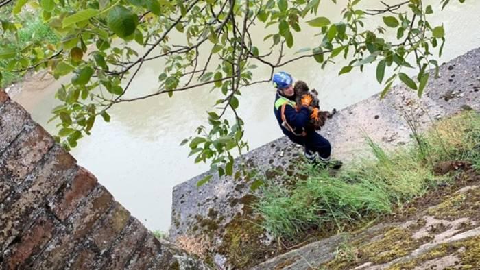 salvataggio rocambolesco di un cane caduto nel fiume cervaro